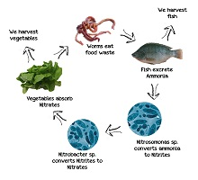 Aquaponics System pros and cons