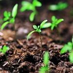 best survival foods to grow