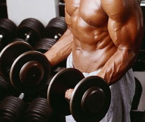 muscle building exercises for beginners